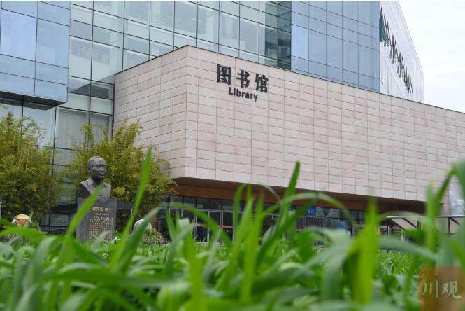 四川农业大学图书馆门前种小麦,体现学科特色