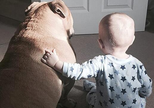 男童與狗親似兄弟