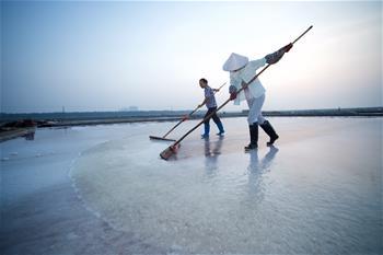 福建泉州:百年鹽場的繁忙伏收季