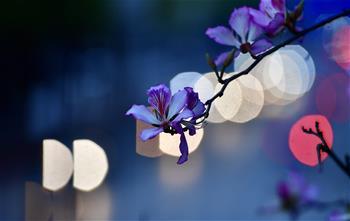 廣西柳州:繁花綠葉春正濃