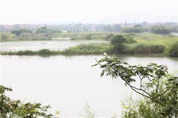 探秘神奇的下渚湖