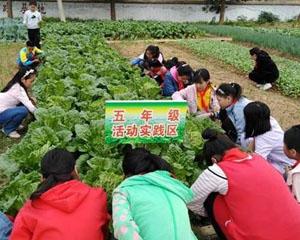 教育部:要把劳动教育作为义务教育阶段必修课