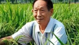 """""""杂交水稻之父""""进入北京中考作文材料"""