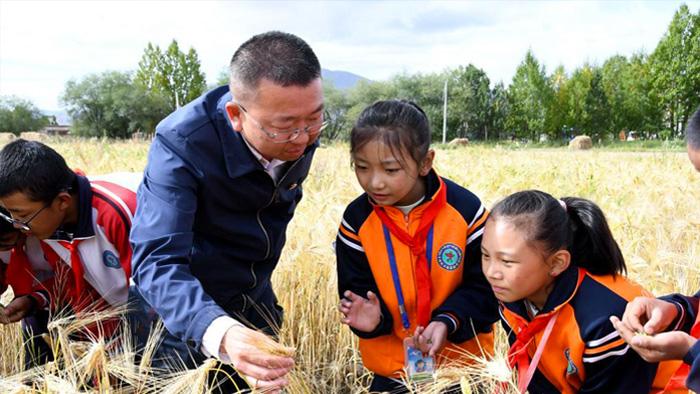 西藏:青稞地裏的思政課