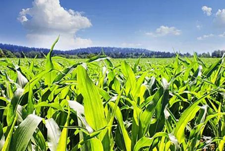 以强农兴农为己任 高质量推进新农科建设