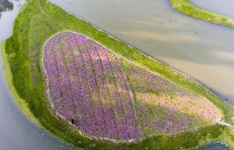 最美人間四月天 航拍鄱陽湖畔花紅草綠