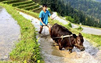 谷雨時節農事忙
